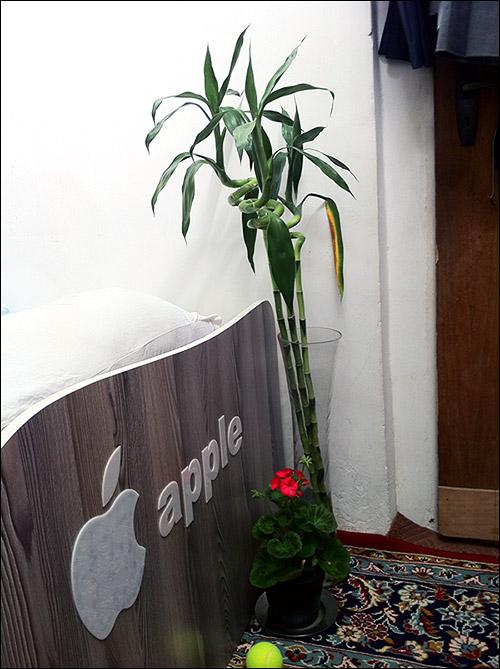 http://img.aftab.cc/news/91/my_flowers1.jpg