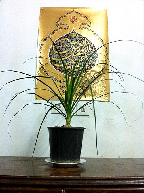 http://img.aftab.cc/news/91/my_flowers2.jpg