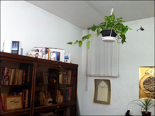 http://img.aftab.cc/news/91/my_flowers3.jpg