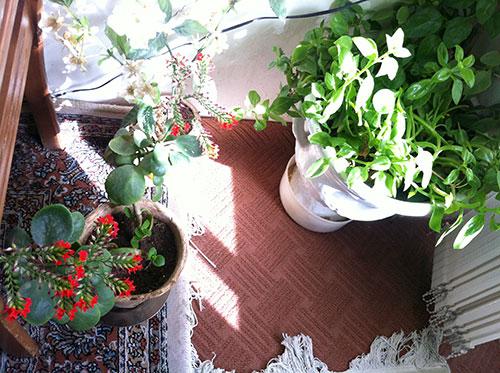 http://img.aftab.cc/news/91/my_flowers5.jpg