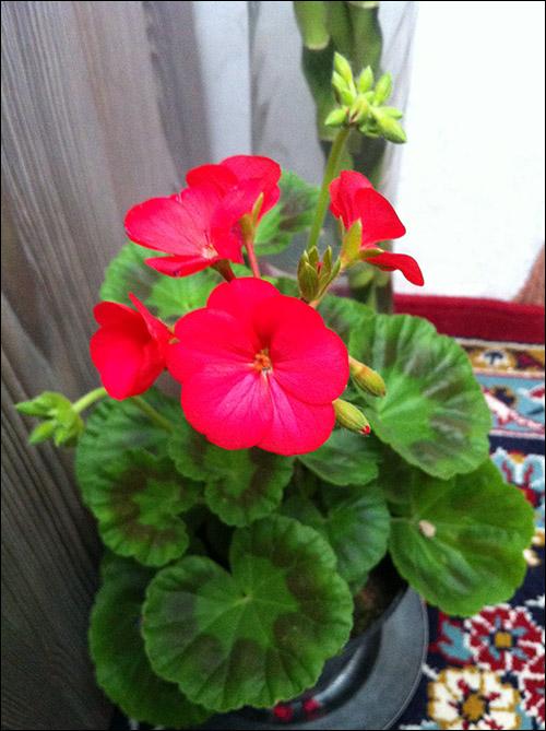 http://img.aftab.cc/news/91/my_flowers6.jpg