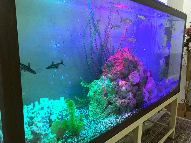 http://img.aftab.cc/news/95/aquarium2.jpg