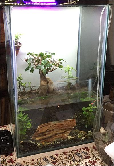 http://img.aftab.cc/news/95/terrarium_plants.jpg