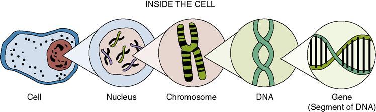 https://img.aftab.cc/news/98/chromosome-dna-gene.jpg