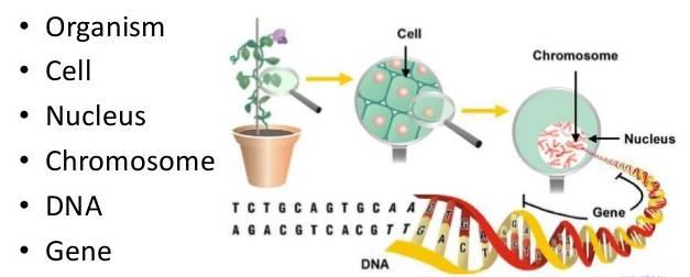 https://img.aftab.cc/news/98/chromosome-dna-gene2.jpg