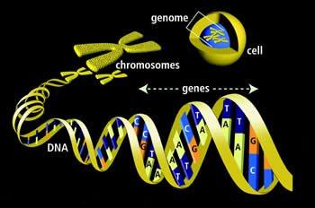https://img.aftab.cc/news/98/genome.jpg
